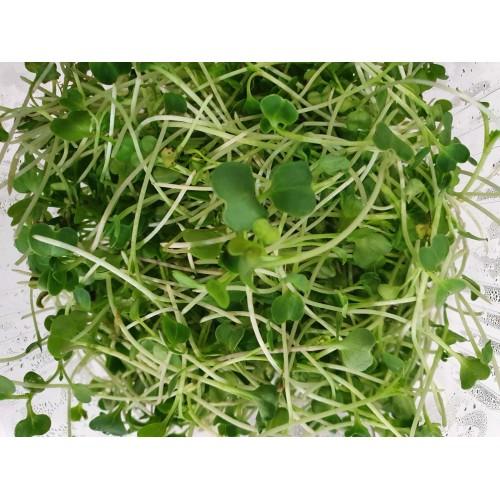 Βιολογική Λαχανίδα πράσινη (Green Kale) microgreens 30gr