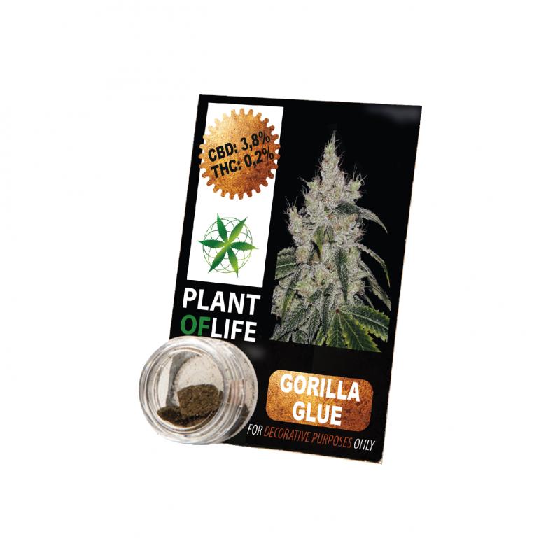 Plant Of Life | Gorilla Glue 3,8% CBD