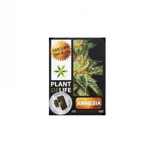 Plant Of Life | Amnesia 3,8% CBD